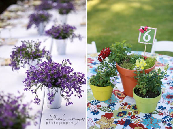 centrotavola non  floreali: piante in vaso