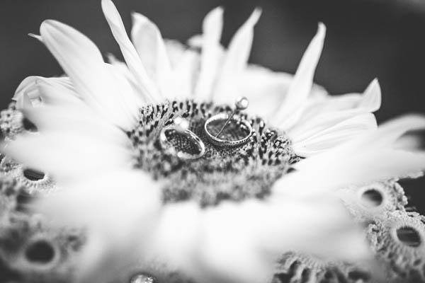 Matrimonio Tema Girasoli : Matrimonio ungherese con gatti e girasoli