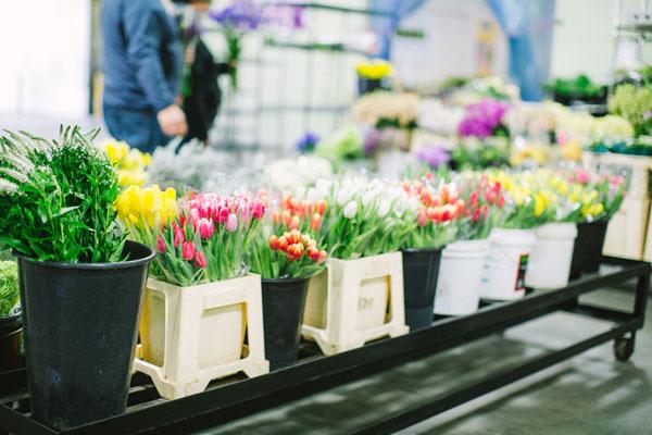 mercato-dei-fiori-san-diego-les-amis-photo-il-profumo-dei-fiori-02
