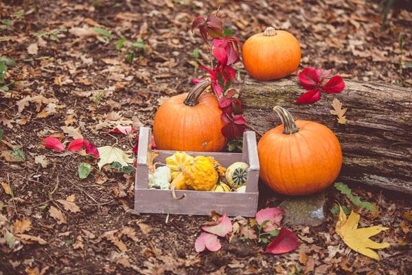 decorazioni autunnali con zucche e foglie