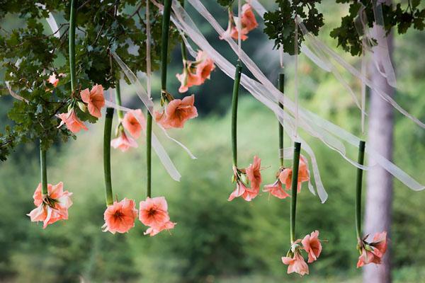 amaryllis sospesi come decorazione cerimonia