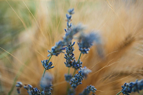 matrimonio in un campo di grano