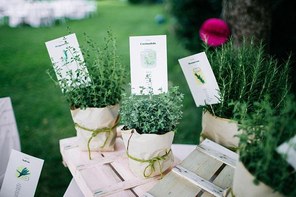 Matrimonio Tema Erbe Aromatiche : Matrimonio a tema cucina al profumo di erbe aromatiche