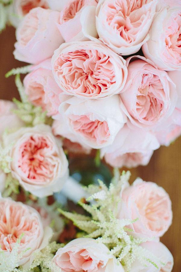 rose da giardino per un matrimonio in primavera