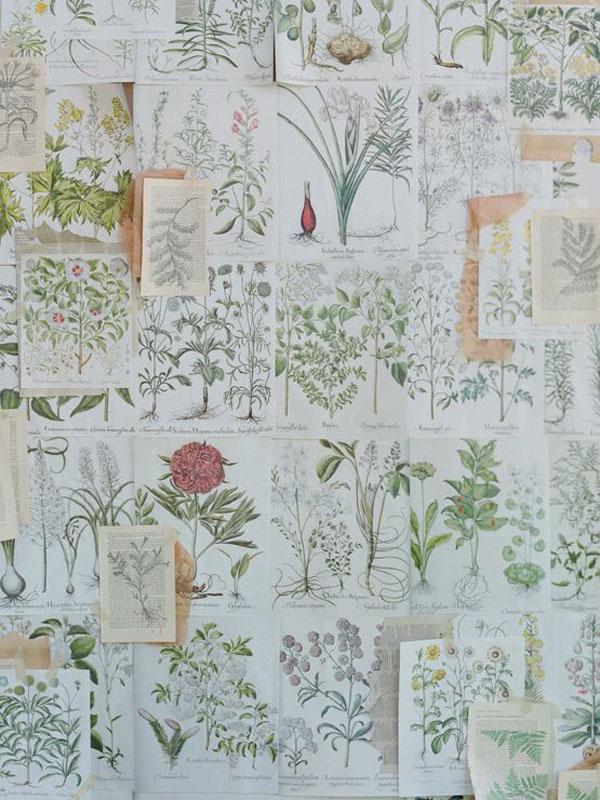 illustrazioni matrimonio botanico