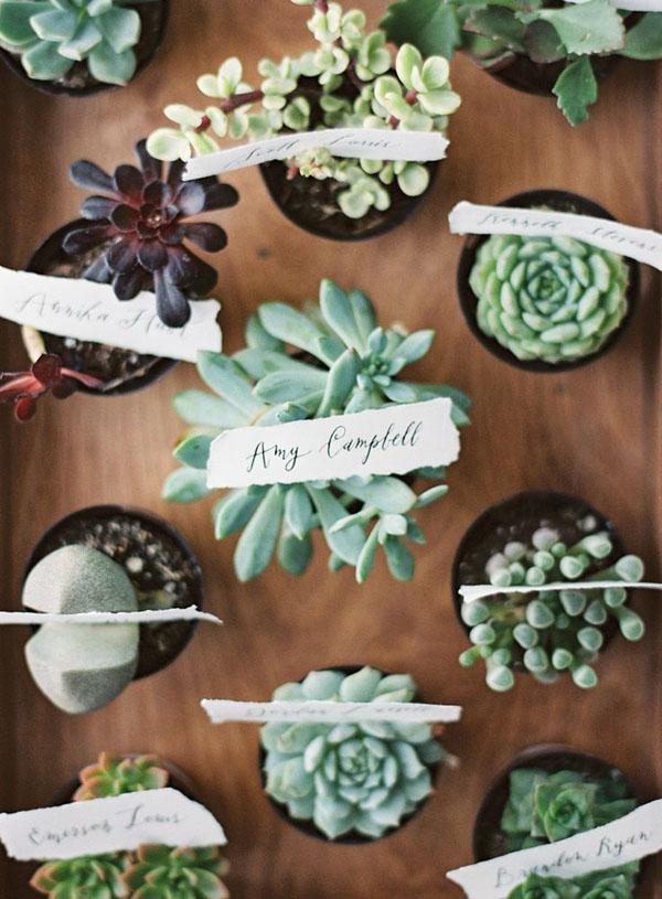 succulente bomboniere matrimonio botanico