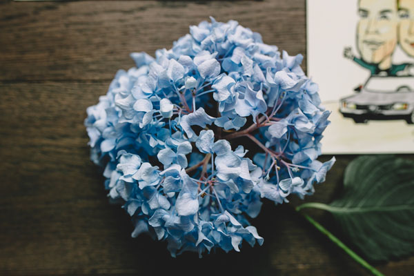 matrimonio azzurro ad asti-26