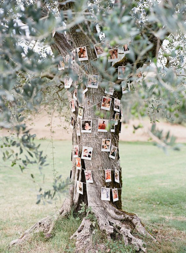 ghirlanda di foto su un albero