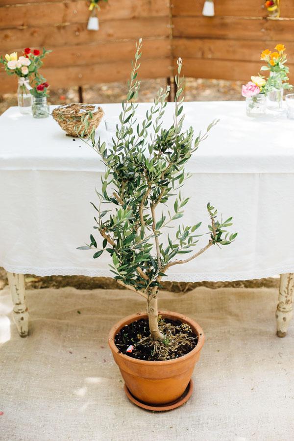 piantare un albero durante la cerimonia