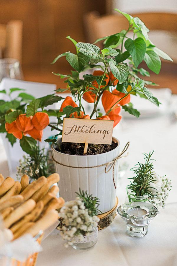 centrotavola con pianta in vaso