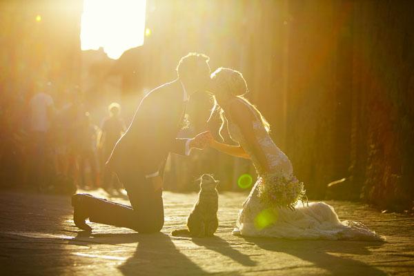 sposi con gatto