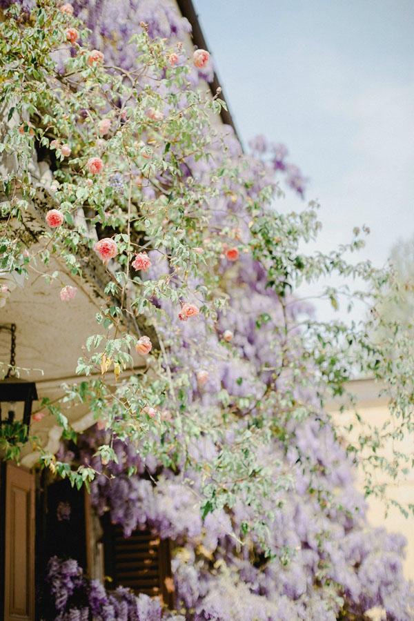 glicini e rose a Villa Kechler de Asarta