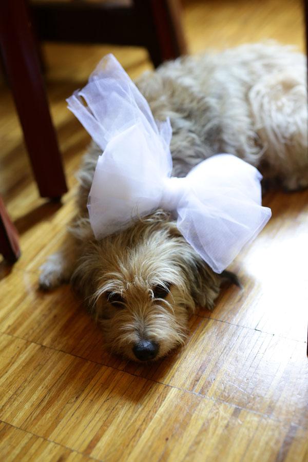 cane con fiocco in tulle