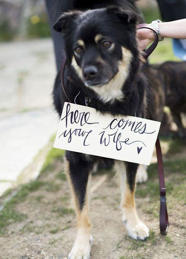 cane cerimonia - animali ai matrimoni