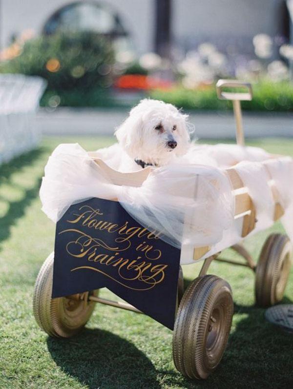 cane damigella - animali ai matrimoni
