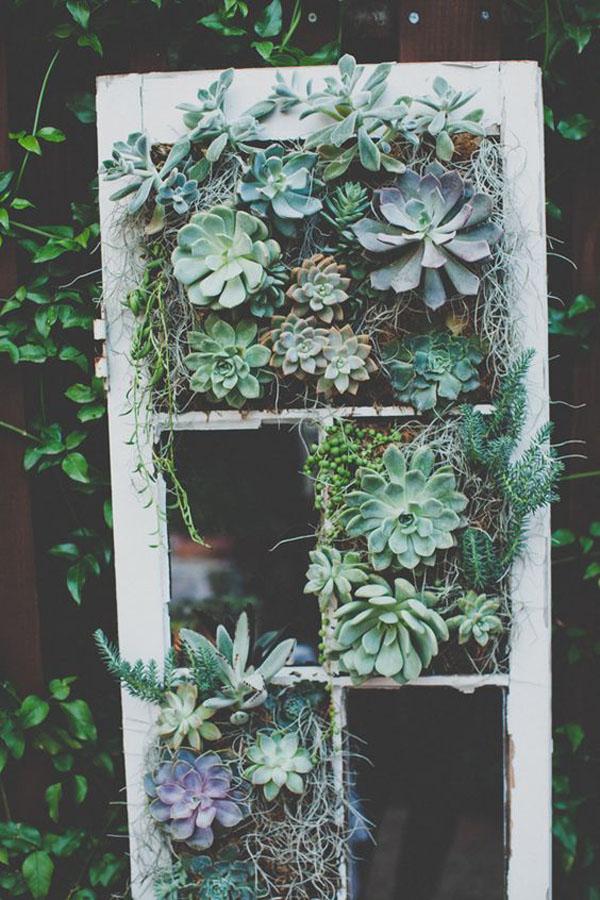 allestimento matrimonio con finestra vintage e piante succulente