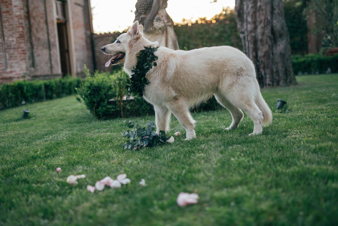 cane con collare di foliage
