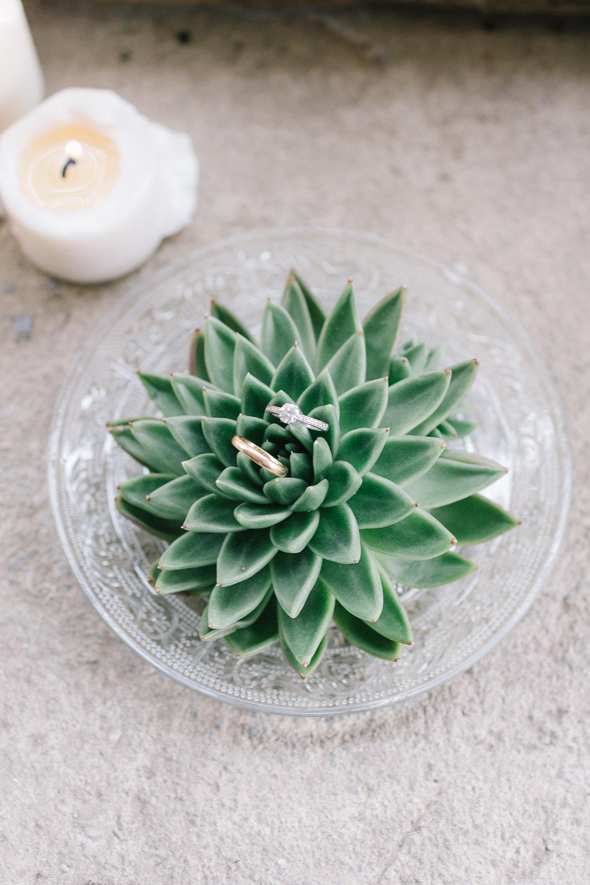 pianta succulenta porta anelli