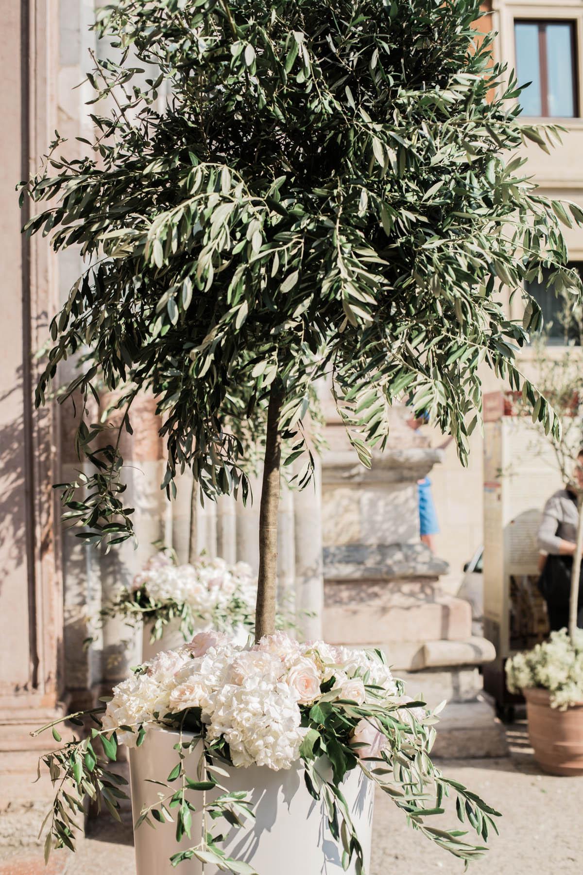 allestimento sagrato chiesa con piante di ulivo e fiori