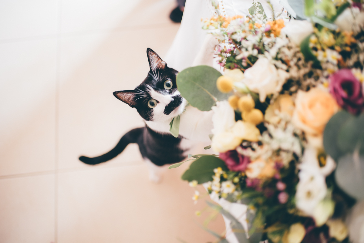 gatto e bouquet da sposa