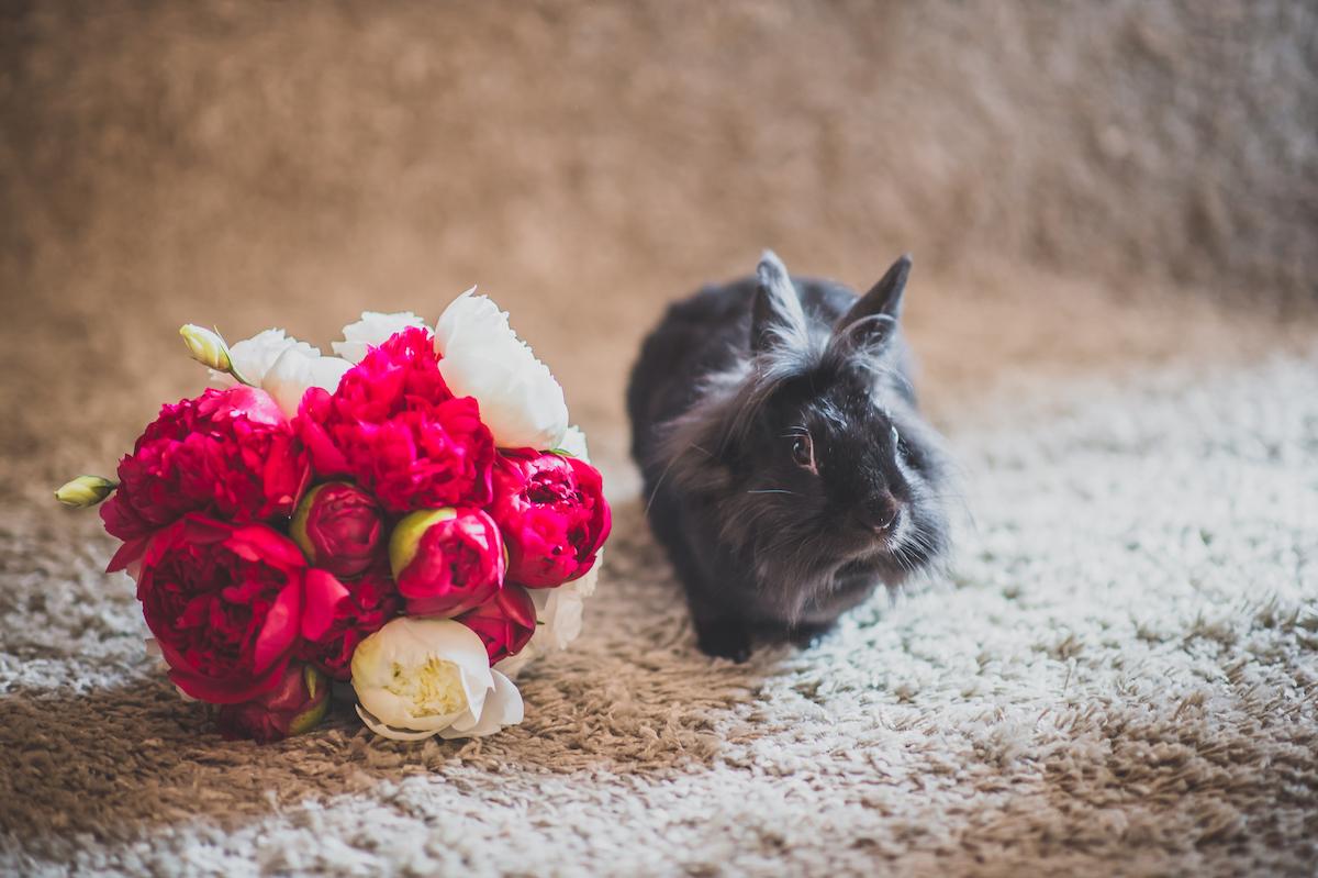 bouquet con peonie rosse e bianche