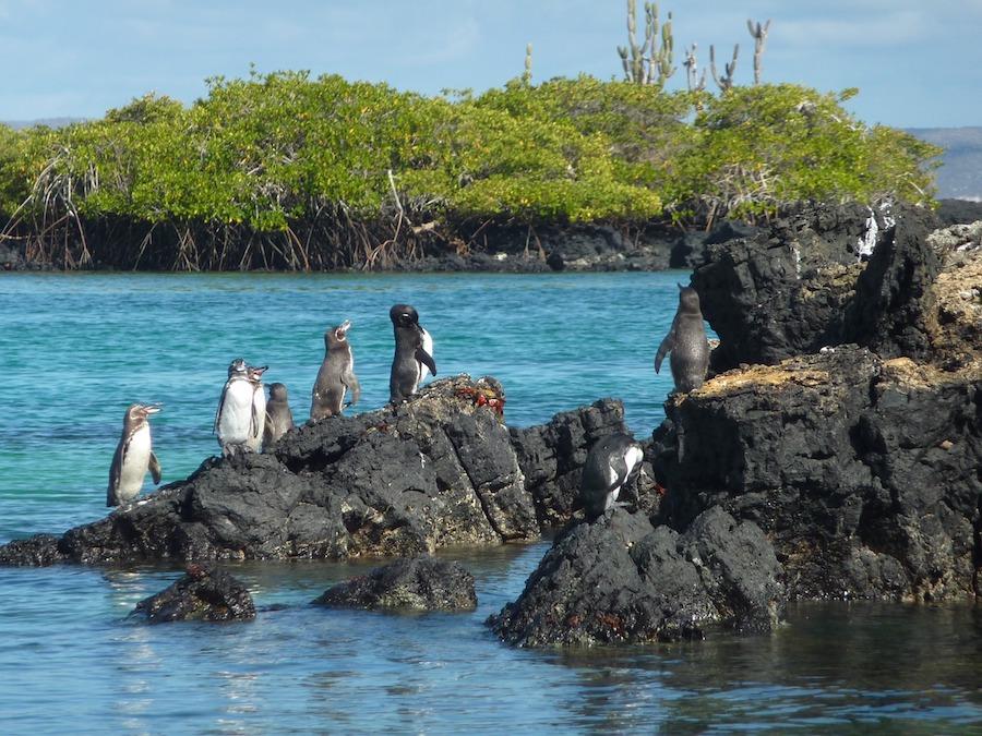 viaggio di nozze alle isole Galapagos con Tuttaltromo(n)do