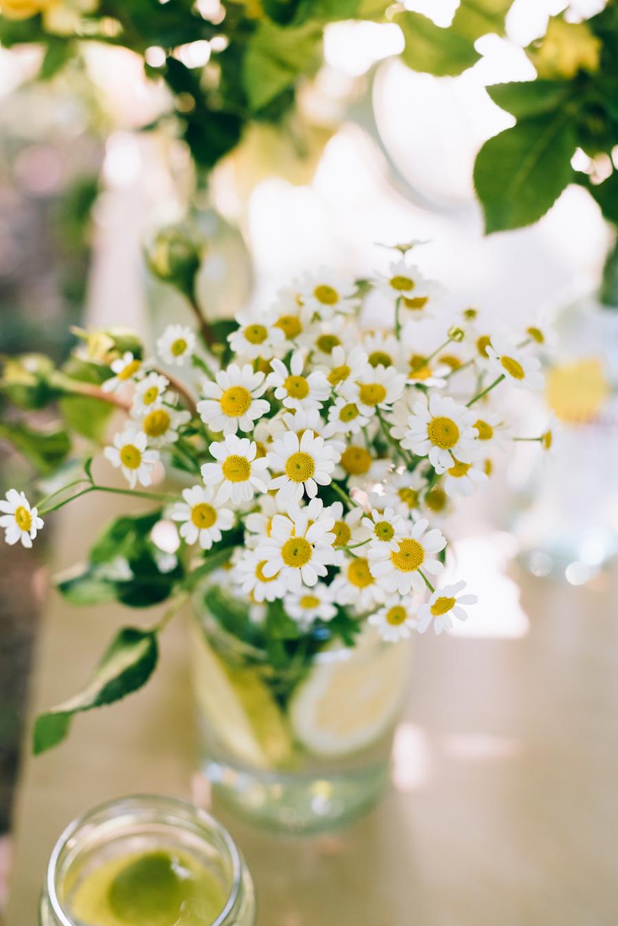 composizione floreale con camomilla e limone