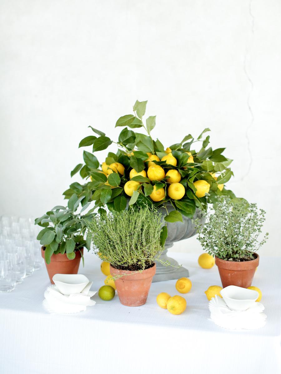 allestimento con limoni ed erbe aromatiche