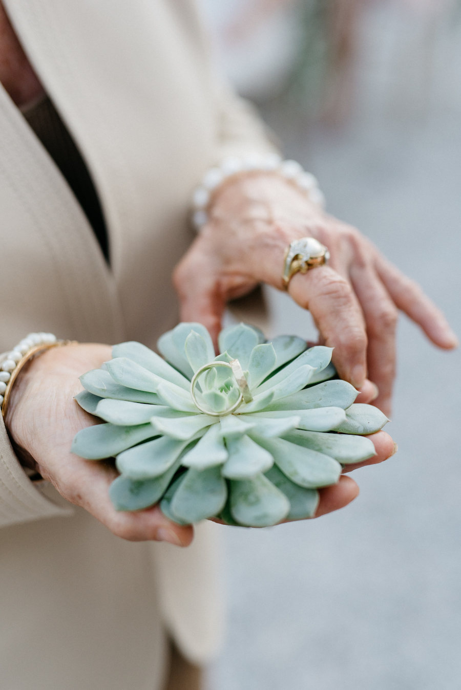 pianta succulenta porta fedi