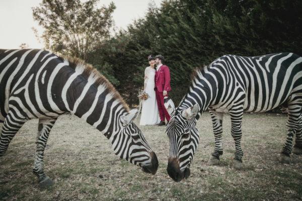 Un matrimonio tra zebre e antilopi