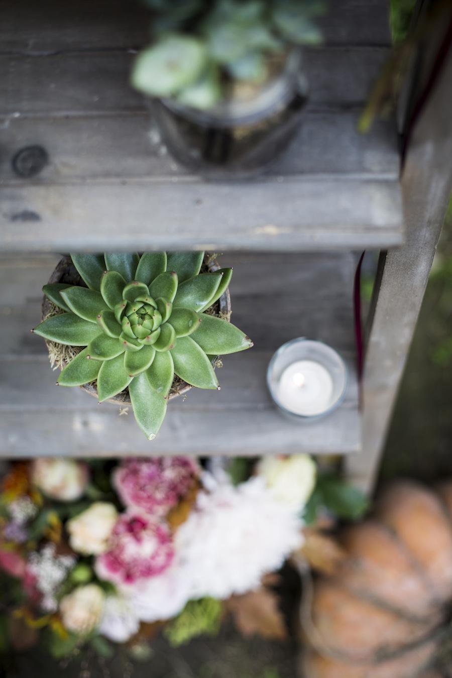 allestimento con piante succulente