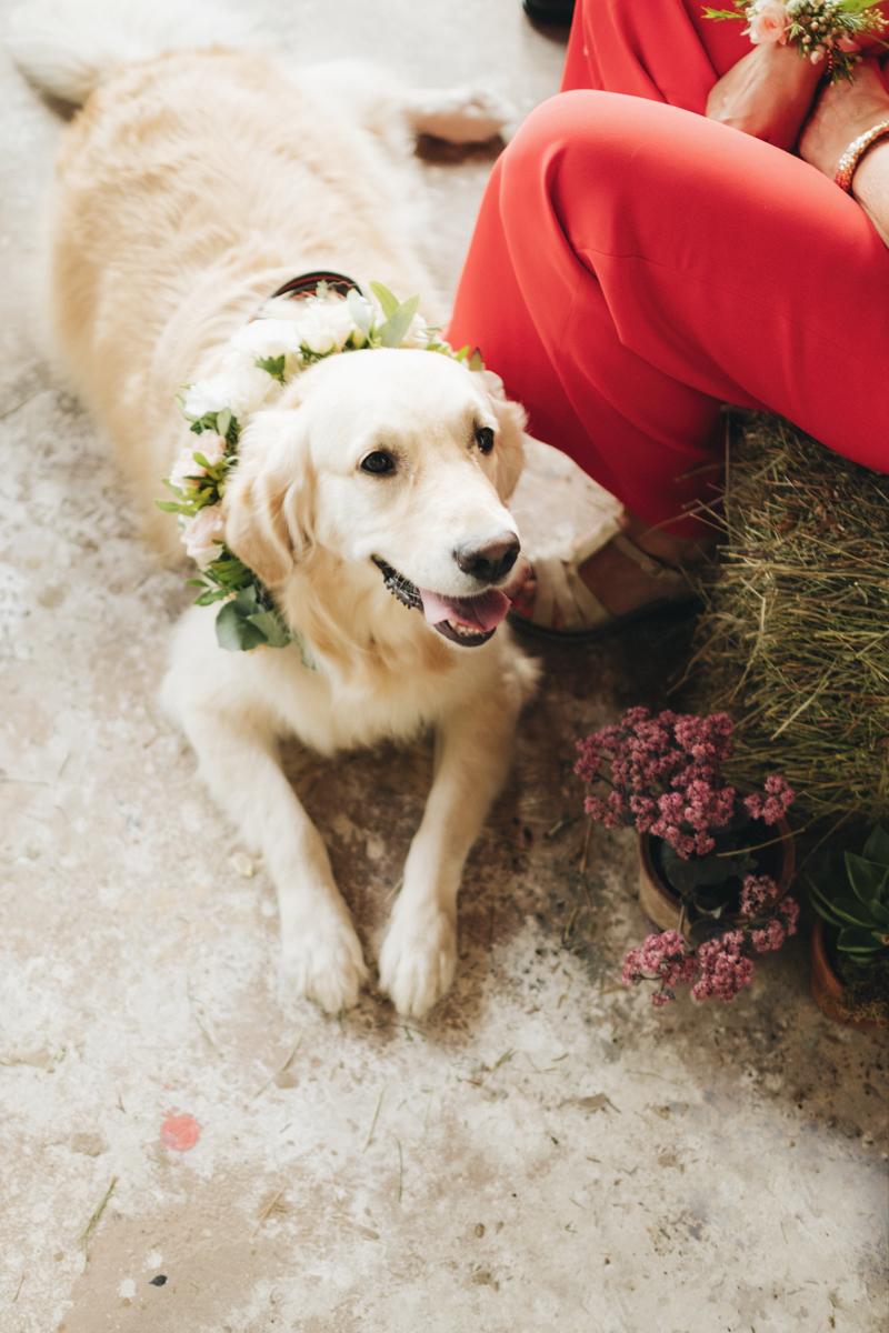 cane con collare floreale