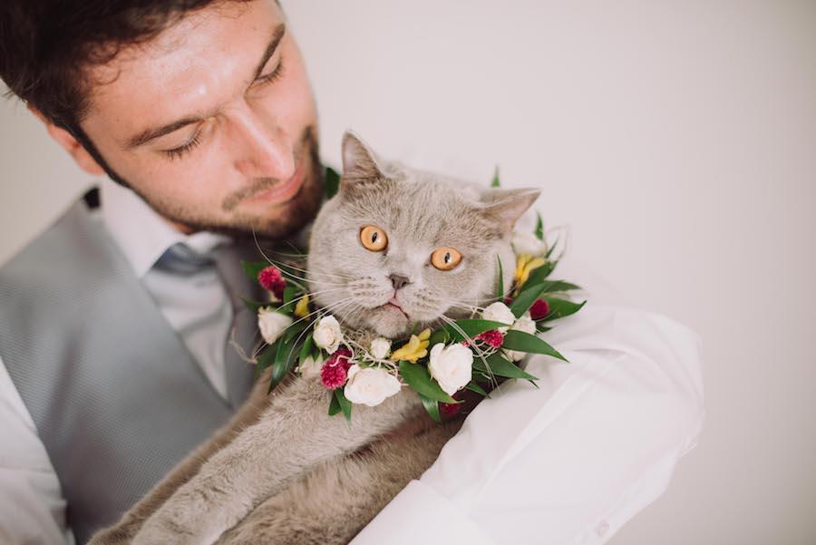 gatto con collare floreale