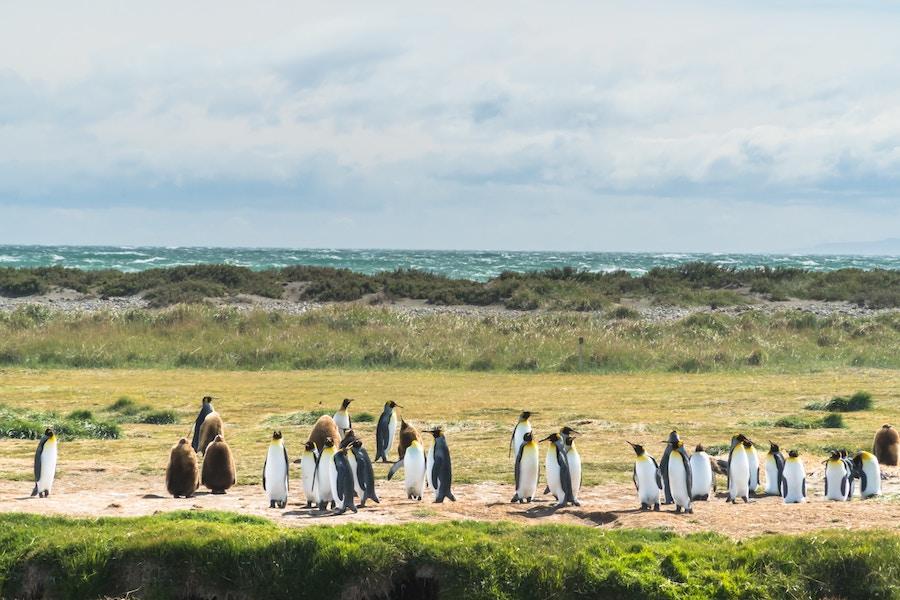 bahia inutil - viaggio in patagonia