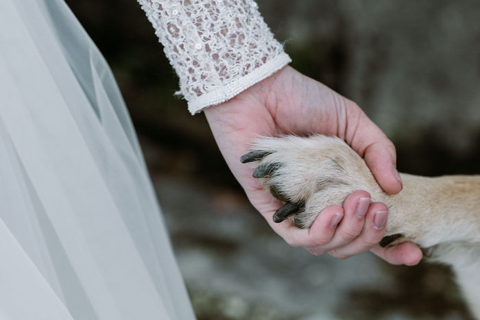 Questa immagine ha l'attributo alt vuoto; il nome del file è matrimonio-regina-di-ghiaccio-17.jpg